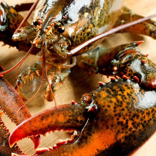 paturel top a lobster