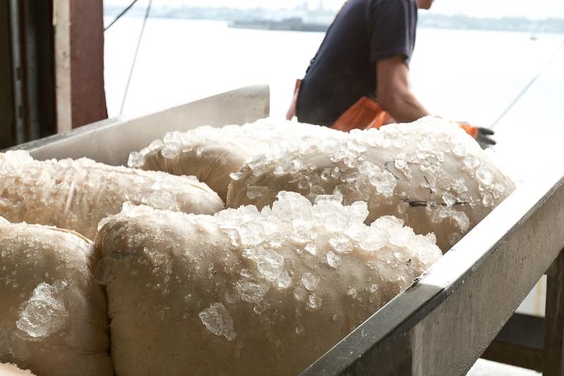 Fresh Sea Scallops, Cheese Cloth Bag